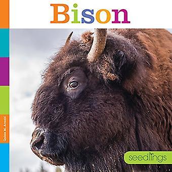 Bison (semis)