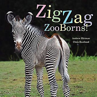 Zigzag Zooborns!: Zoo Baby Colors and Patterns (Zooborns)