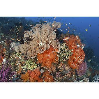 Bright svamper myke koraller og sjøliljer i en fargerik Komodo seascape Komodo nasjonalpark Indonesia plakatutskrift