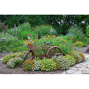 Old bicycle with flower basket in a garden with stone path Zinnias obelisk and Trellis Marion County Illinois USA Poster Print