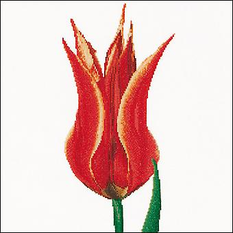 Red & Yellow Lily Tulip On Aida Counted Cross Stitch Kit-13.25
