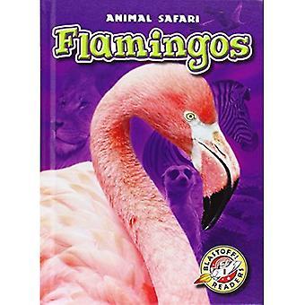 Flamingos (Blastoff! Readers: Animal Safari)