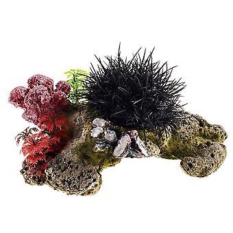 Erizo de mar de vida Coral clásico 230mm