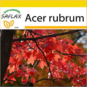 Saflax - Potting Set - 20 seeds - Red Maple - Erable rouge - Acero rosso  - Arce rojo - Rotahorn