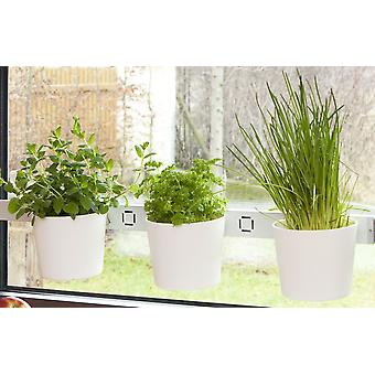 Herbs head plants head herb garden flower pot white window and wall mounting