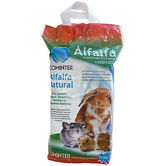 Cominter Dried Alfalfa (Small pets , Hay)
