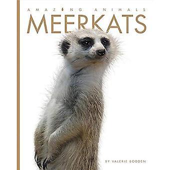 Meerkats (Amazing Animals)