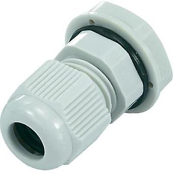 Cable gland PG21 Polyamide Light grey (RAL 7035) KSS EGRWW21GY4 1 pc(s)