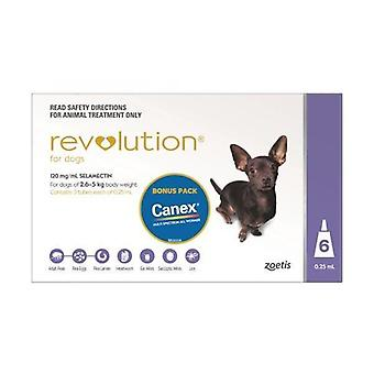 Revolution Purple 6 Pack