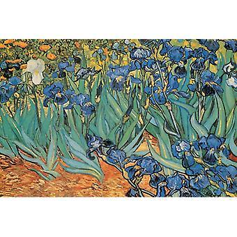 Saint-Remy c1889 irissen - Vincent Van Gogh Poster Poster Print