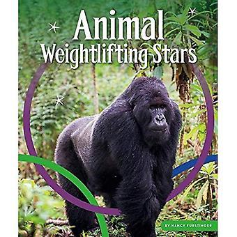 Animal Weightlifting Stars (Animal Olympics)
