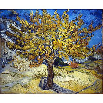 Vincent Van Gogh - Mulberry Tree plakat Print Giclee