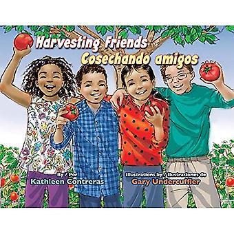 Harvesting Friends / Cosechando Amigos