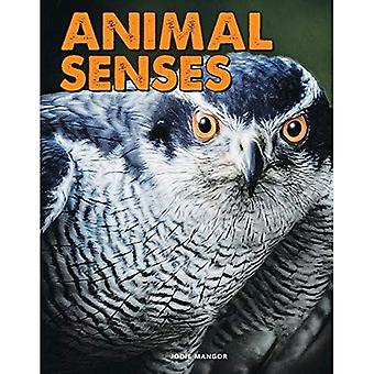 Animal Senses (Science Alliance)