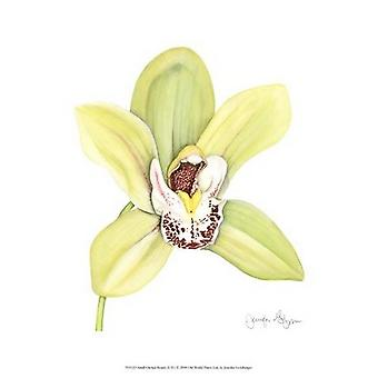Small Orchid Beauty II (U) Poster Print by Jennifer Goldberger (10 x 13)
