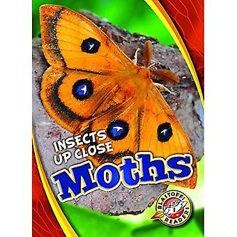 Moths (Insects Up Close)