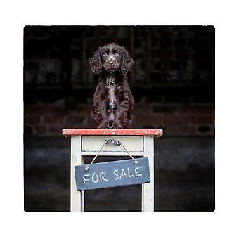 المسائل القطرية طباعة المشروبات كوستر الكلب مجموعة--بيلي للبيع