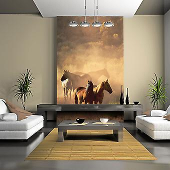 Wallpaper - Wild horses of the steppe