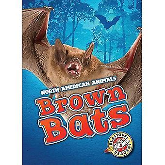 Brown Bats (Blastoff Readers. Level 3)