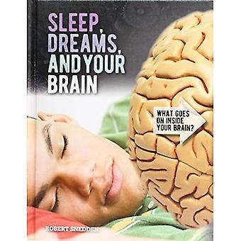 Sleep, Dreams, and Your Brain