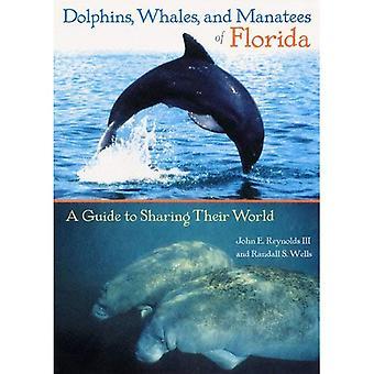 Delfiner, valar och manater i Florida: en Guide för att dela deras värld