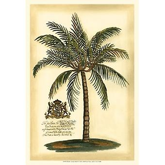 British Colonial Palm III Poster Print by Vision studio (13 x 19)