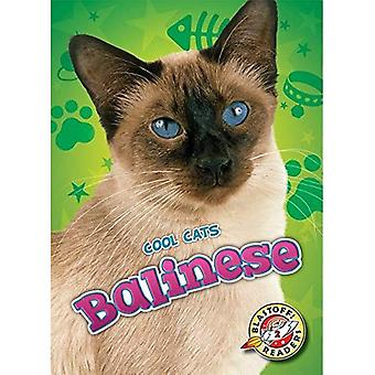 Balinese (Cool Cats)