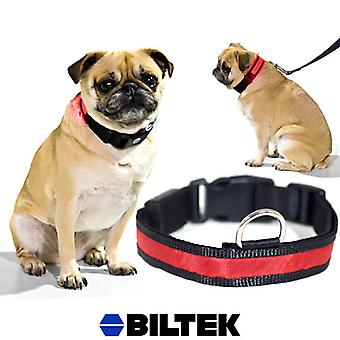 Red LED Light Dog Collar - Small - Dog Pet Night Safety Fashionable Flashing Light Up Collar Nylon Large Adjustable