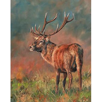 Red Deer Stag  oil on canvas Poster Print by David Stribbling