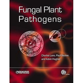 Svamp växt patogener