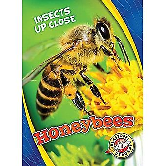 Honeybees (Insects Up Close)