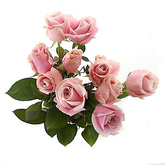 beautiful light-pink bouquet of roses, small | Height: 60 cm