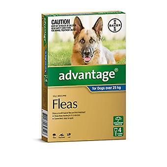 Advantage Blue 4 Pack XL Dogs 25-50kg