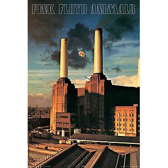 Pink Floyd - animales cartel Poster Print