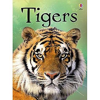 Iniciantes: tigres