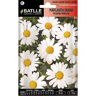 Batlle Dwarfish Marguerite (Tuin , Tuinieren , Zaden)