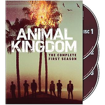 Animal Kingdom: Complete First Season [DVD] USA import