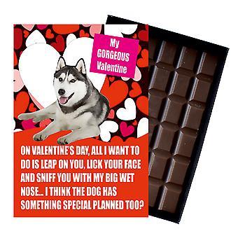 Siberian Husky present till alla hjärtans dag presenterar för hundälskare boxed choklad