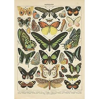 Papillons II Poster Print by Gwendolyn Babbitt