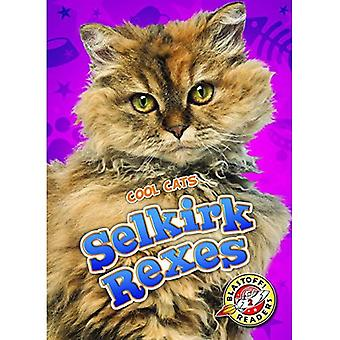 Selkirk Rexes (Cool Cats)