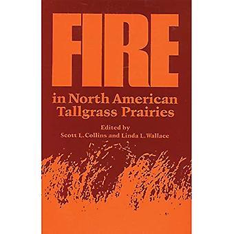 Feuer im nordamerikanischen Tallgrass Grasland