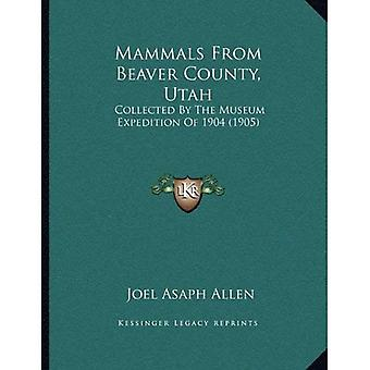 Mammals from Beaver County, Utah: Collected by the Museum Expedition of 1904 (1905)