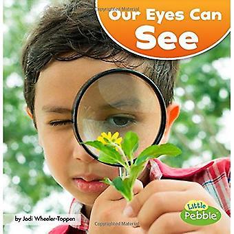Onze ogen kunnen zien (onze geweldige zintuigen)