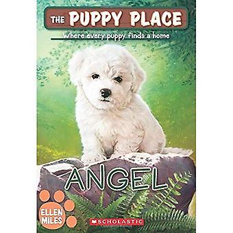 Angel (den valp plats #46) (valp plats)
