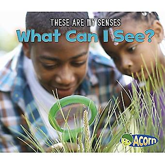 What Can I See? (Acorn: These Are My Senses)