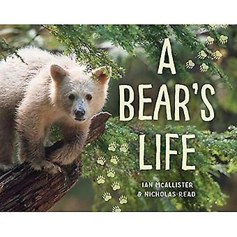 A Bear's Life (My Great Bear Rainforest)