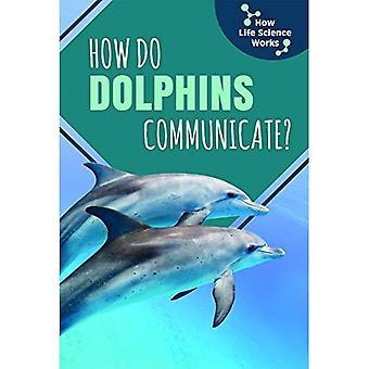 Hur kommunicerar delfiner?