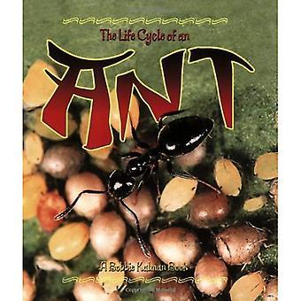 De levenscyclus van een mier (Life Cycle van A... (Paperback))