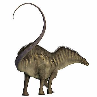 Amargasaurus dinosaur Amargasaurus was a herbivorous sauropod that lived in Argentina during the Cretaceous Period Poster Print