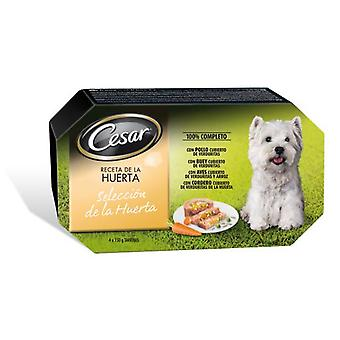 Cesar Wet Food Multipack Selection of the Orchard 4x150 gr (Dogs , Dog Food , Wet Food)